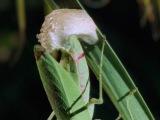 BBC: Эти загадочные животные - Удивительные способы размножения (3 серия)